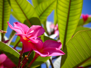 flowers_spring_gran_canaria_009