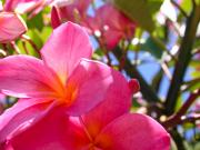 flowers_spring_gran_canaria_011