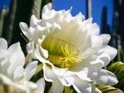 flowers_spring_gran_canaria_013