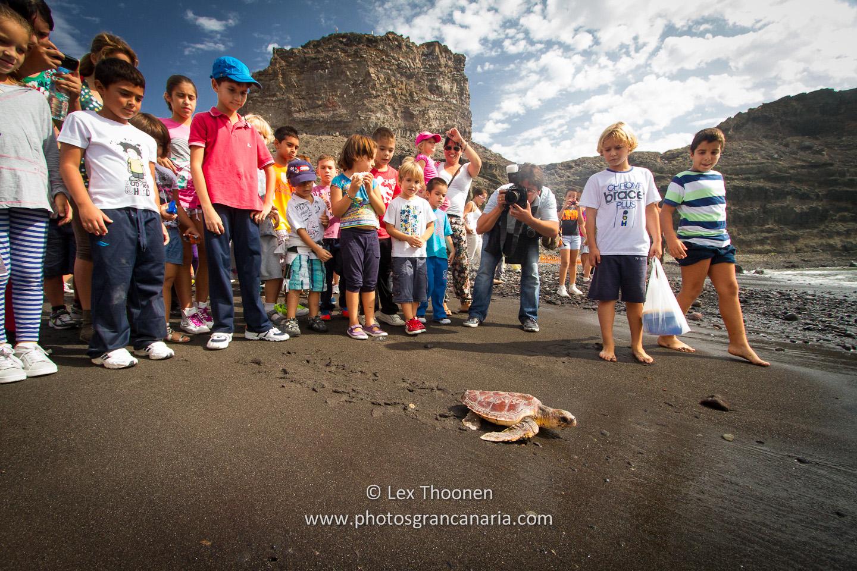 liberar-tortugas-y-pardelas-008