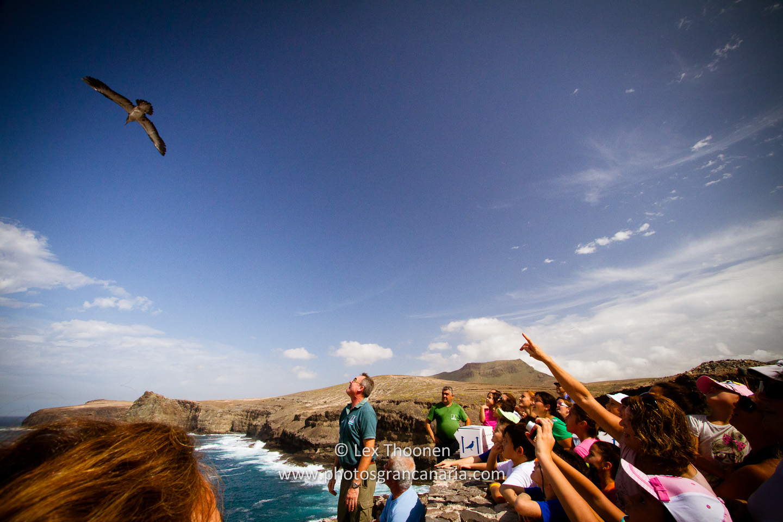 liberar-tortugas-y-pardelas-022