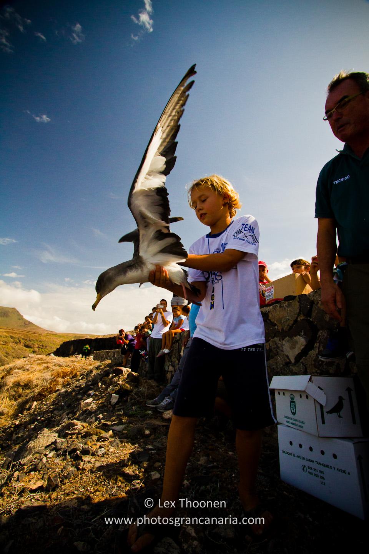 liberar-tortugas-y-pardelas-035