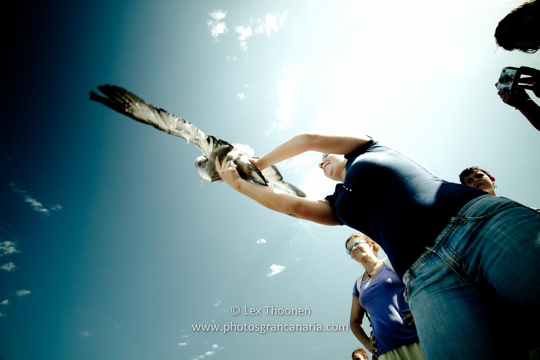 liberar-tortugas-y-pardelas-046