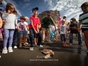 liberar-tortugas-y-pardelas-007