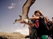 liberar-tortugas-y-pardelas-039