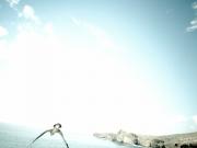 liberar-tortugas-y-pardelas-041